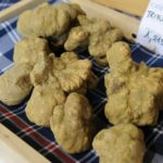 gourmet-and-wine-tour-in-piedmont-from-milan-truffle-hunt-lunch-winery-visit-and-tasting_header-23220
