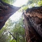 muir-woods-and-sausalito-guided-tour-with-transportation_header-13406